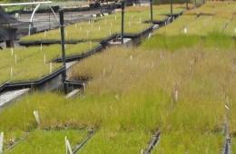 CEMEX Quarry – Contract Grow
