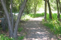 City of San Jose Trails Mitigation
