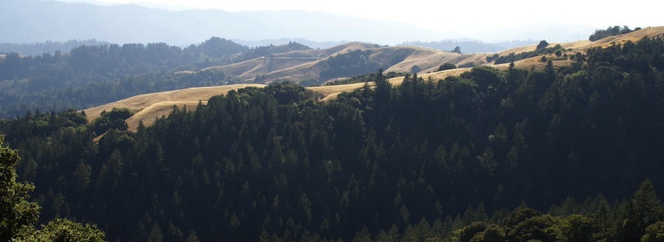 skyline tree farm960x350