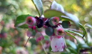 hucklberry - Bri Weldon