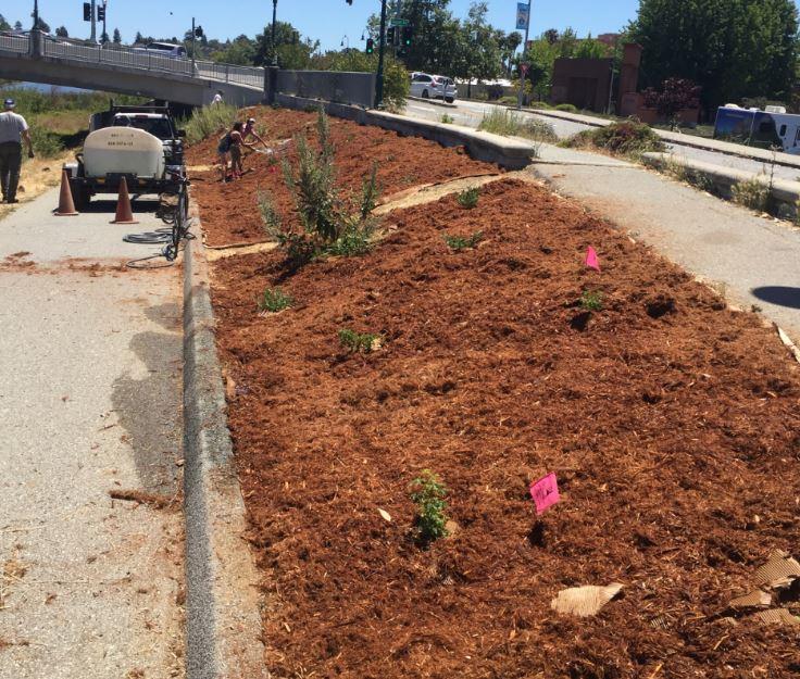 Parklet Planting